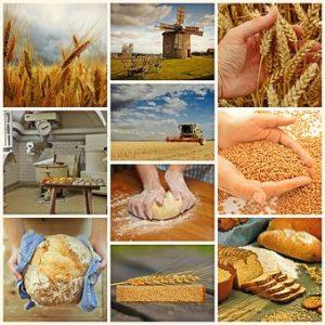 Tutto sulla pasta: dall'integrale alle farine speciali