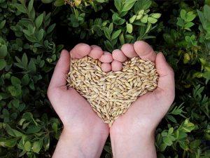 Miglio, farro ed orzo i cereali per la tua salute